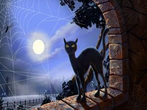 Gato negro a la luz de la luna