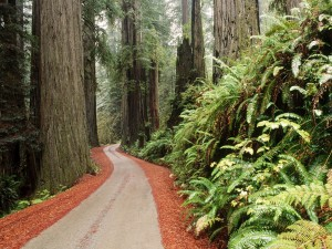 Parque Nacional Redwood (California)