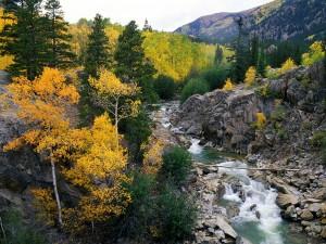 Río entre rocas y árboles otoñales