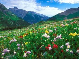 Primavera en las montañas