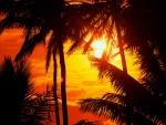 Sol brillando tras las palmeras