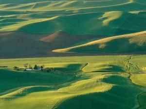 Gran campo verde