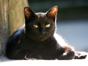 Un gato negro tumbado al sol