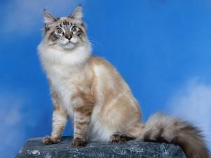 Un bonito gato posando para la foto