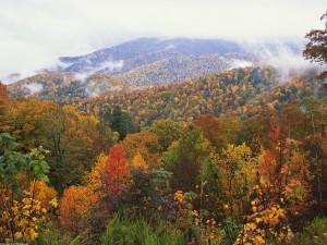 Niebla sobre el bosque otoñal