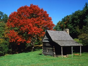 Árbol otoñal junto a una cabaña