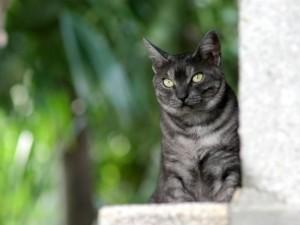 Un bonito gato de ojos verdes