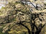 Árboles en flor durante la primavera