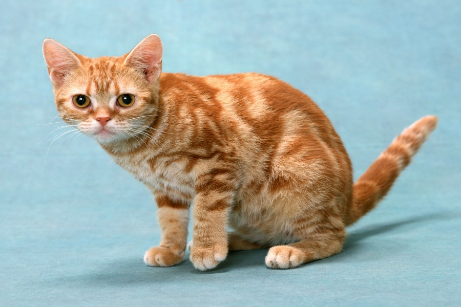 Un bonito gato naranja