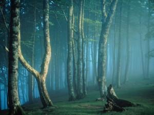 Niebla en el interior de un bosque