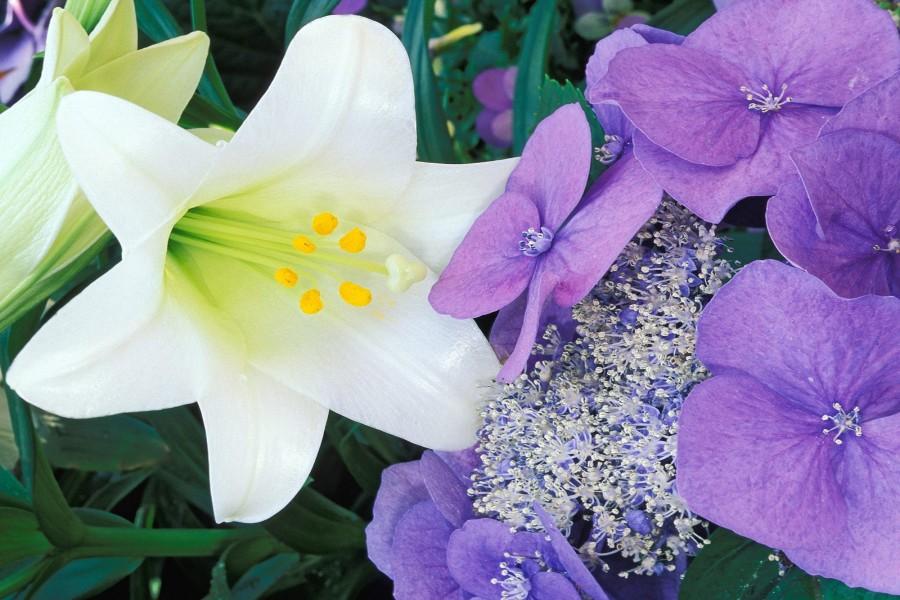 Flores blancas y lilas