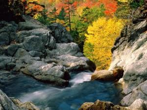Río y árboles otoñales