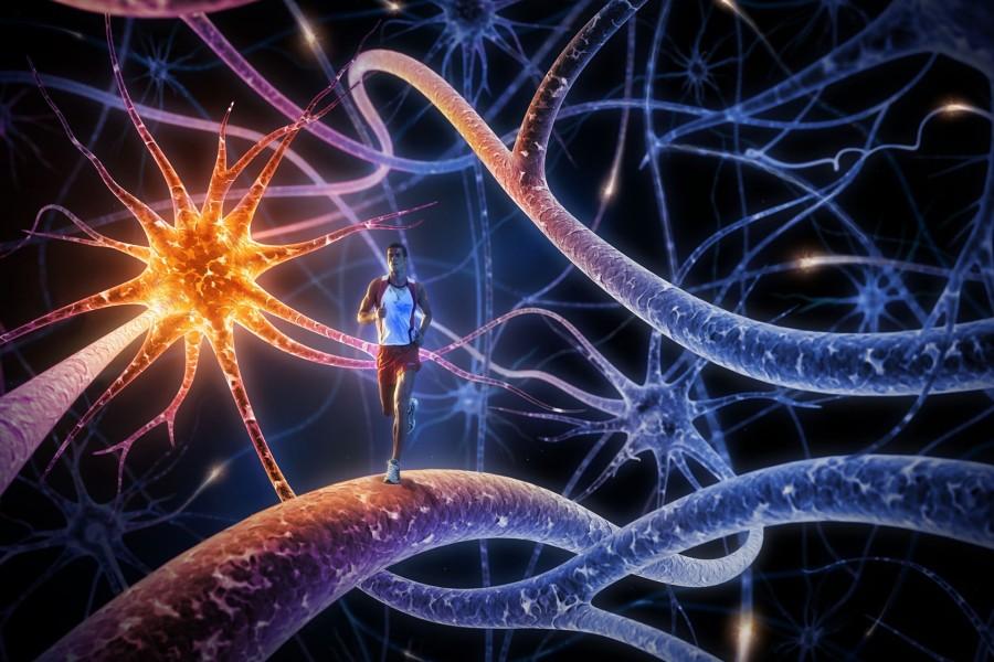 Running dentro de un cerebro