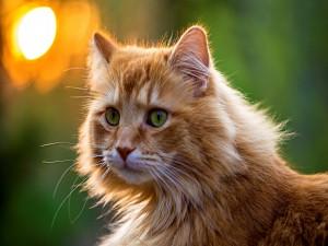 Bonito gato de ojos verdes