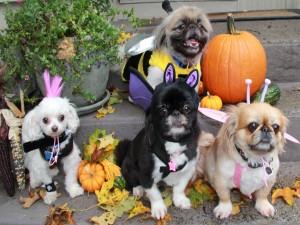 Perros preparados para festejar Halloween