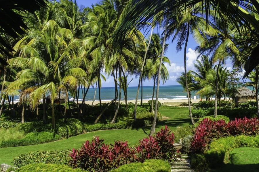 Palmeras frente a una playa en Puerto Rico