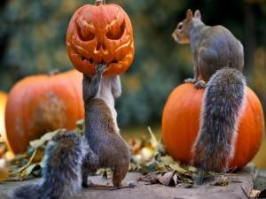 Ardillas jugando con unas calabazas de Halloween