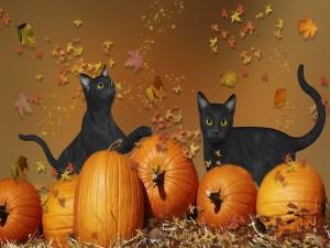 Gatos negros entre calabazas de Halloween