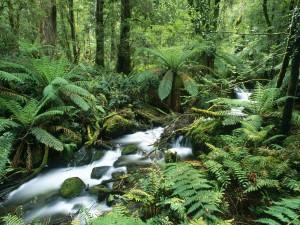 Riachuelo en un hermoso bosque