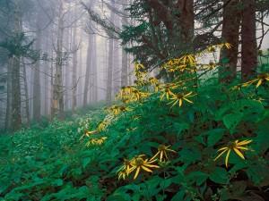 Grandes flores en el bosque