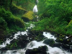 Río entre la vegetación del bosque