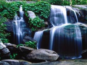 Bonita cascada en un bosque