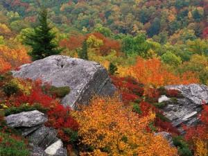 Rocas entre árboles otoñales