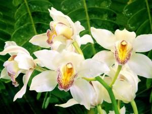 Orquídeas en la naturaleza