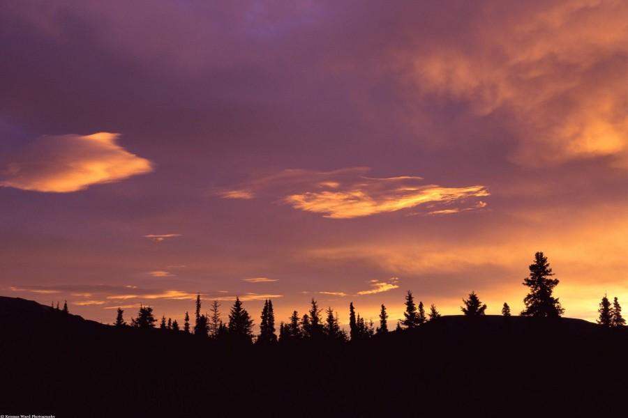 Bonito amanecer sobre un bosque
