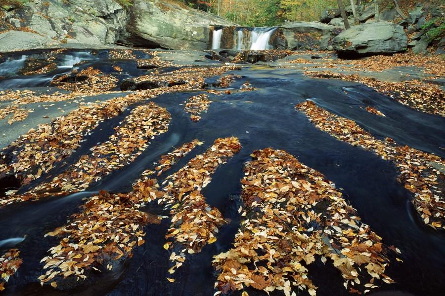 Hojas secas en el cauce del río