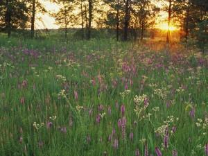 Flores vistas al amanecer