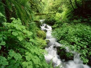 Riachuelo fluyendo en un verde bosque