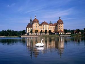 Cisnes junto al Palacio de Moritzburg