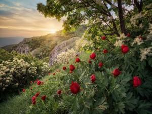Vistosas flores en las montañas