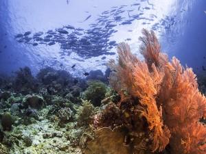 Peces y corales en el fondo marino