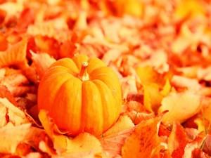 Calabaza sobre las hojas otoñales