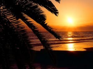 Bonita playa al atardecer