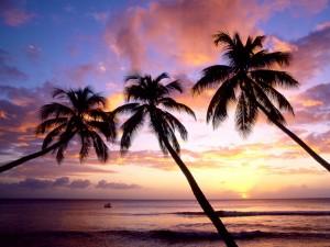 Tres palmeras a orillas del mar