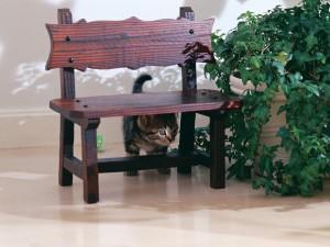 Gatito tras un banco de madera