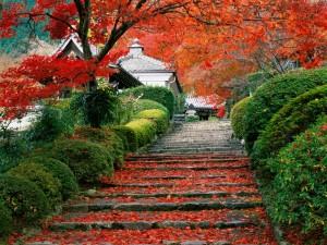 Otoño en un jardín de Kioto (Japón)