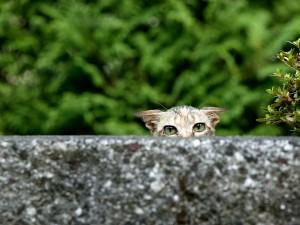 Un gato espiando tras el muro