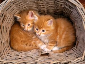 Dos gatitos acurrucados en una cesta