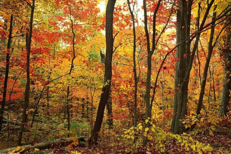 Un bosque en otoño