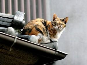 Gato magullado en un tejado