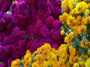 Flores para el Día de Muertos