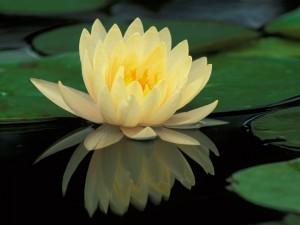 Hermosa flor en el agua