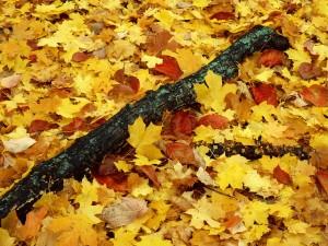 Hojas otoñales en el suelo