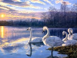 Cisnes en un lago (pintura de Darrell Bush)