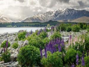 Flores que crecen entre las rocas