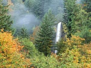 Cascada entre árboles